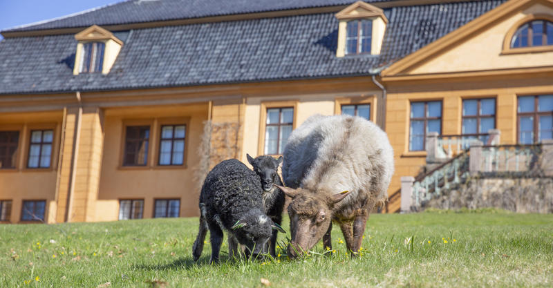 Sauer i parken, foto Jonas Løvaas Gjerstad (Foto/Photo)