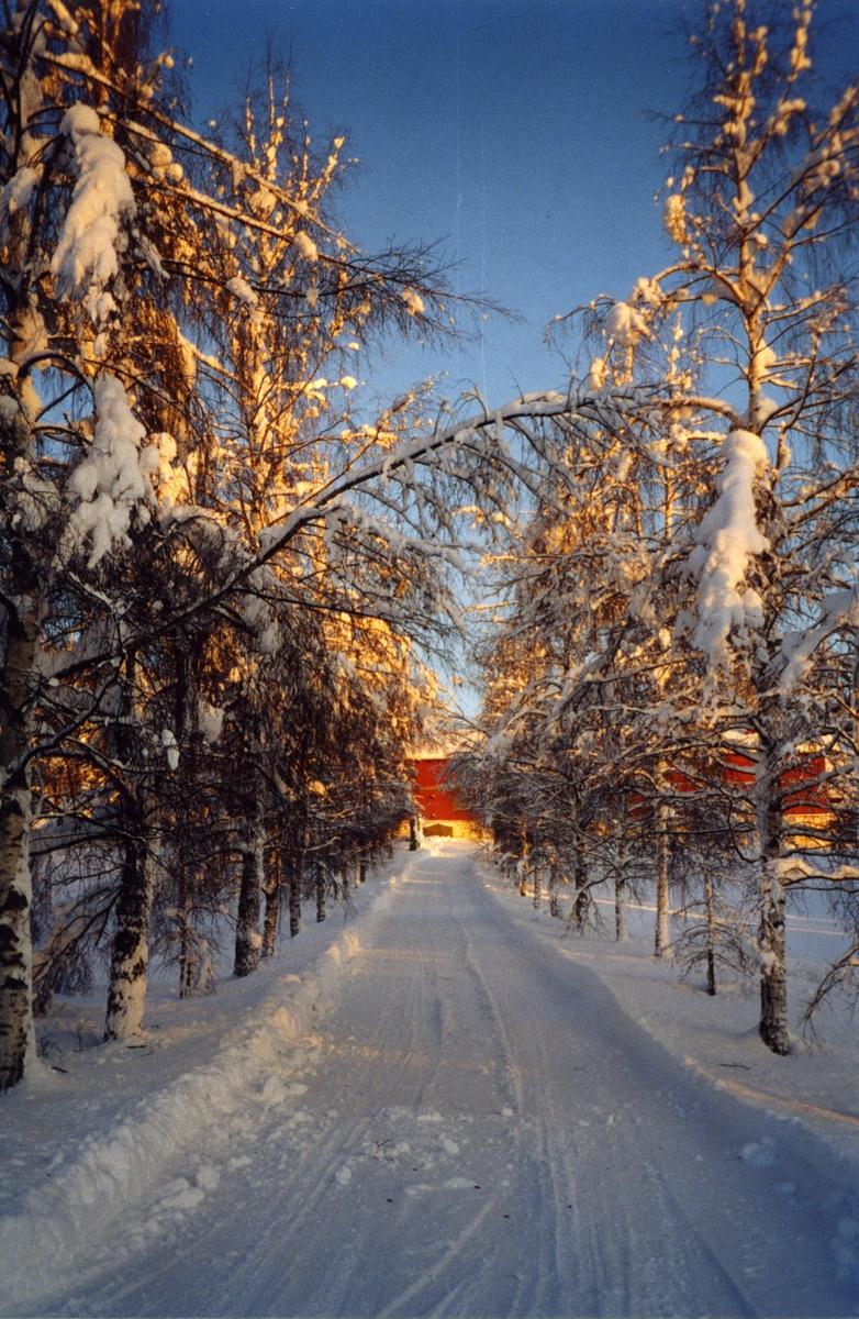 DOK: 2001/02, Aulestad, allé, vinter,
