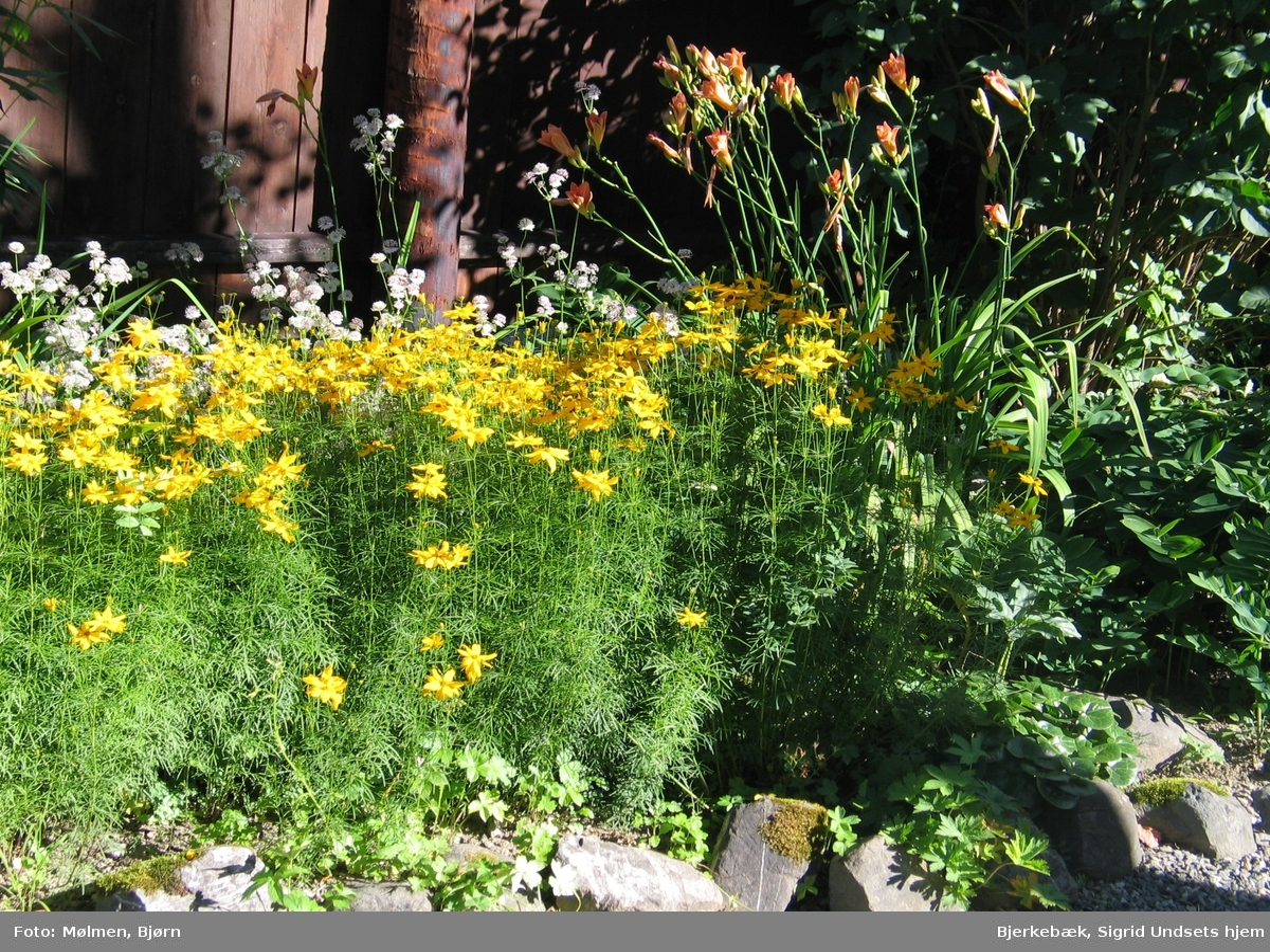 DOK:2007, Bjerkebæk, hage, blomster, kransøye,