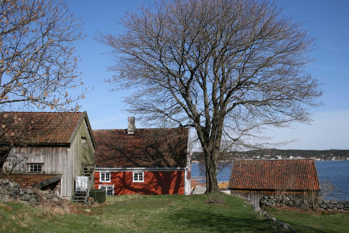 Merdøgaaard. Tunet sett fra sør. Fjøset, våningshuset, sjøboden. Stort lønnetre uten lau.