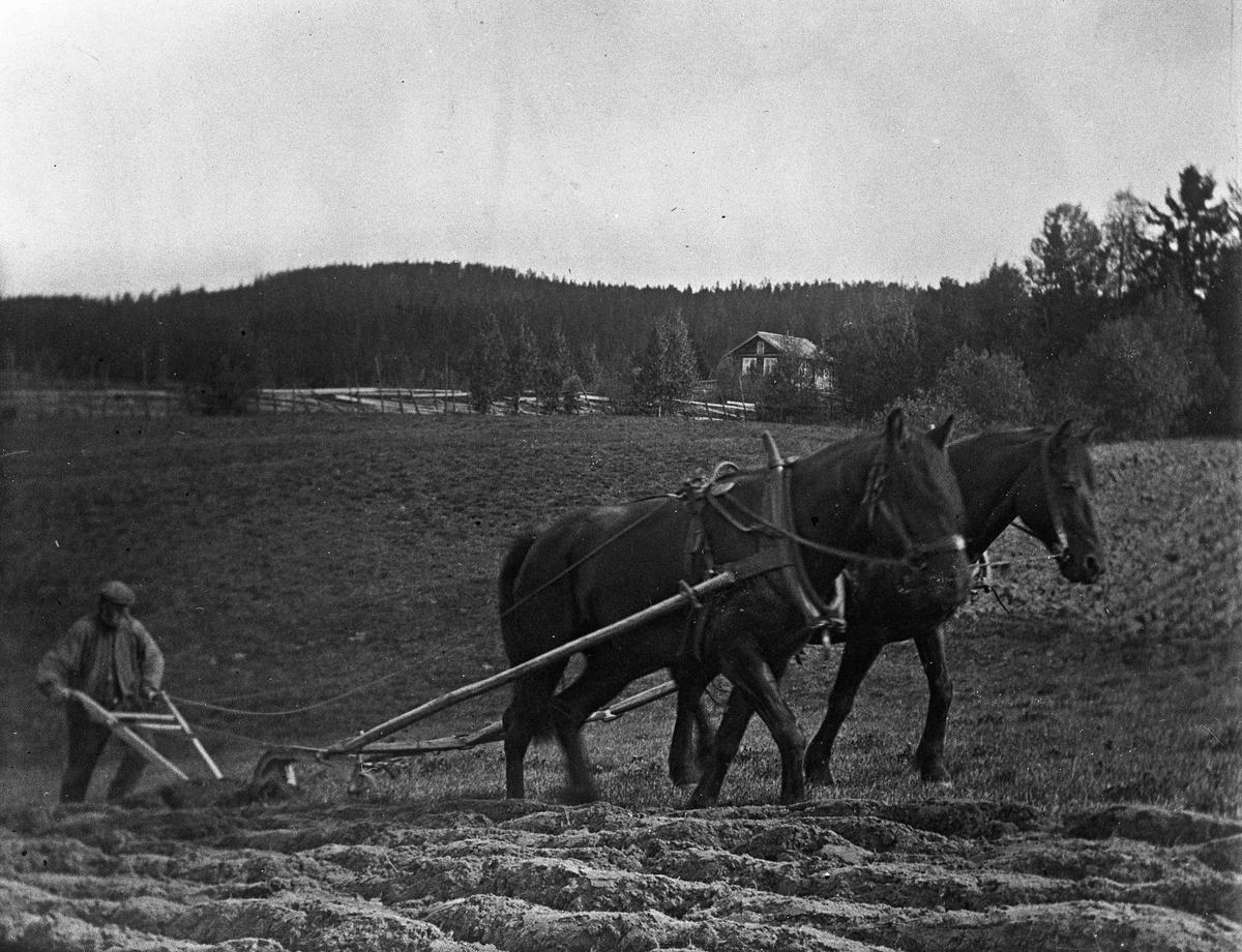Pløying av jorde med hest.