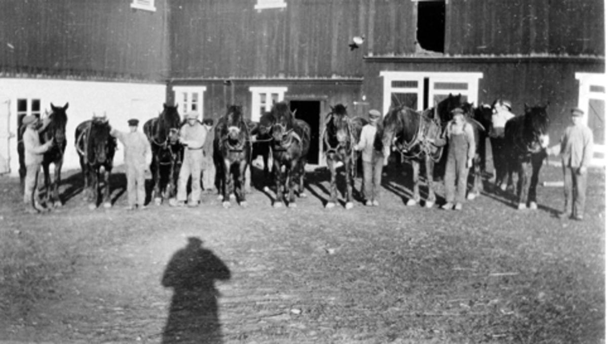 Elleve hester og åtte menn oppstillt utenfor stallen på Frøberg, Furnes.