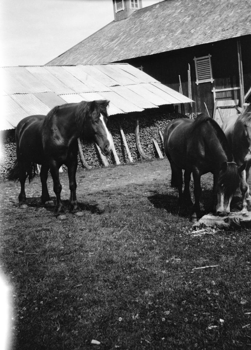 Nordre Rustad, hester