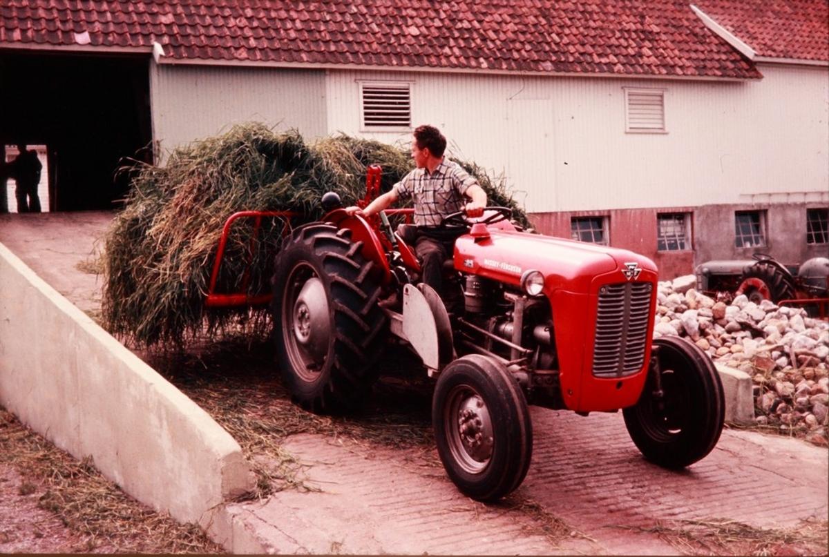 Innkjøring av silogras på løa med silosvans bakmontert på Massey-Ferguson-traktor hos Odd Braut på Horpestad, sjåføren er Egil Braut