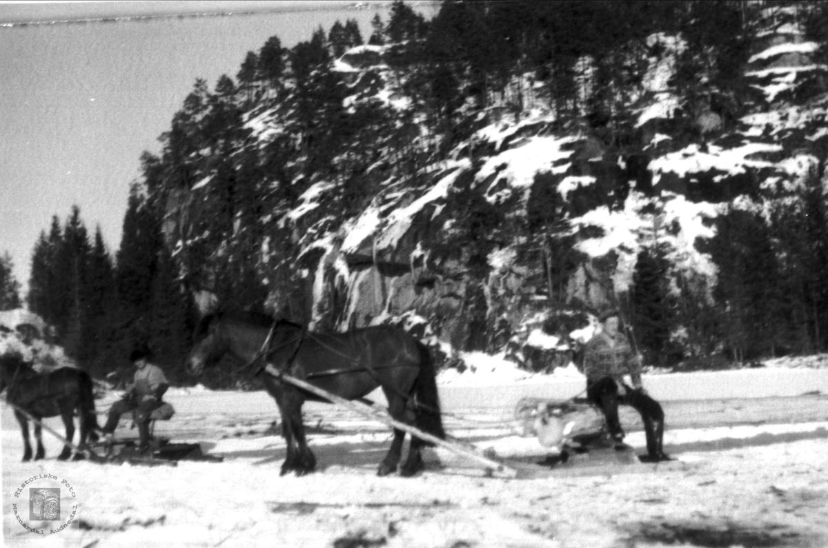 "Skogsarbeid ""Under haugen"" Foss i Bjelland."