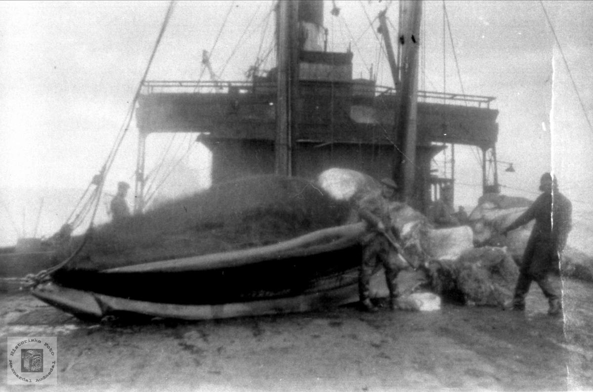 """Arne Høye sen. på hvalfangst i 1931 med båten """"Pelagos""""."""