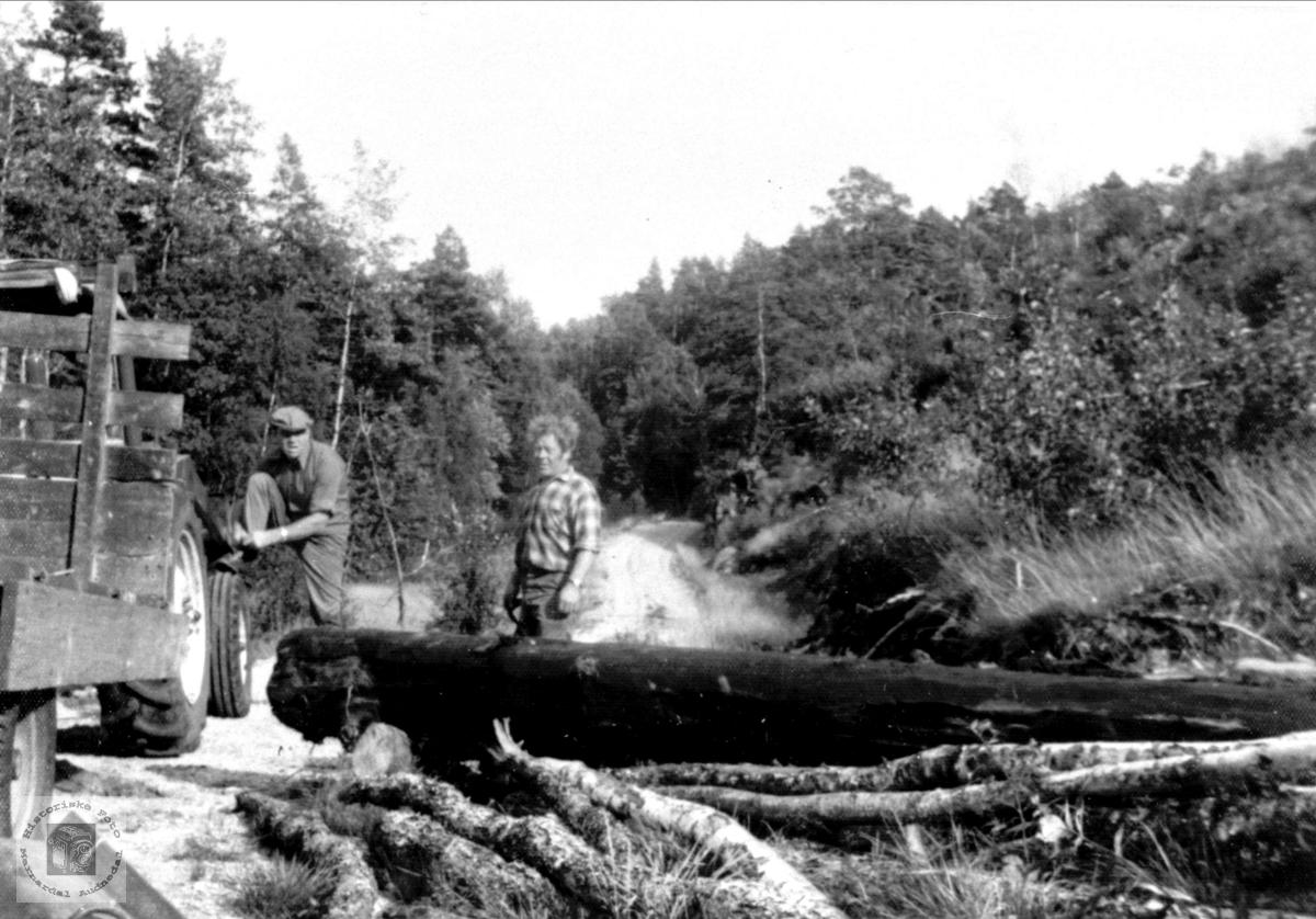 Nestan 3000 år gammel stokk, Øyslebø.