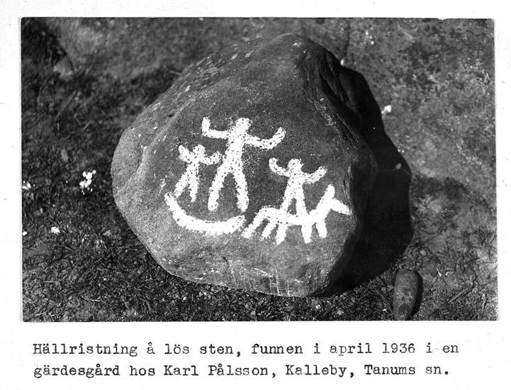 """Text på kortet: """"Hällristning å lös sten, funnen i april 1936 i en gärdesgård hos Karl Pålsson, Kalleby, Tanum sn""""."""