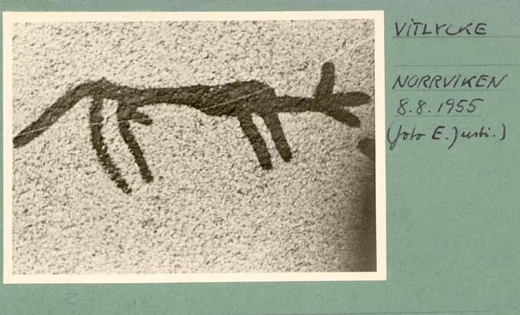 """Noterat på kortet: """"Vitlycke Norrviken. 8.8.1955."""""""