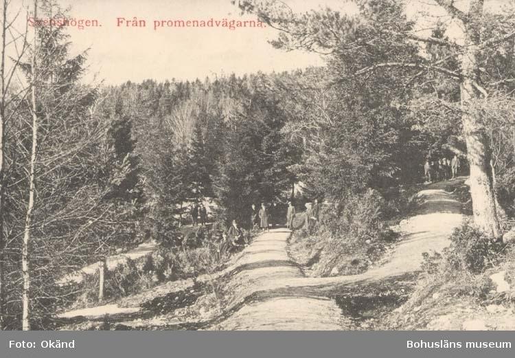"""Tryckt text på kortet: """"Svenshögen. Från promenadvägarna."""" ::"""