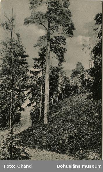 """Tryckt text på vykortets baksida: """"Uddevalla, Parti från Gustafsberg."""""""