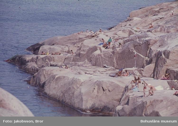 """""""Hållö. Vid marmorbadet. Många soldyrkar på klipporna"""". ::"""