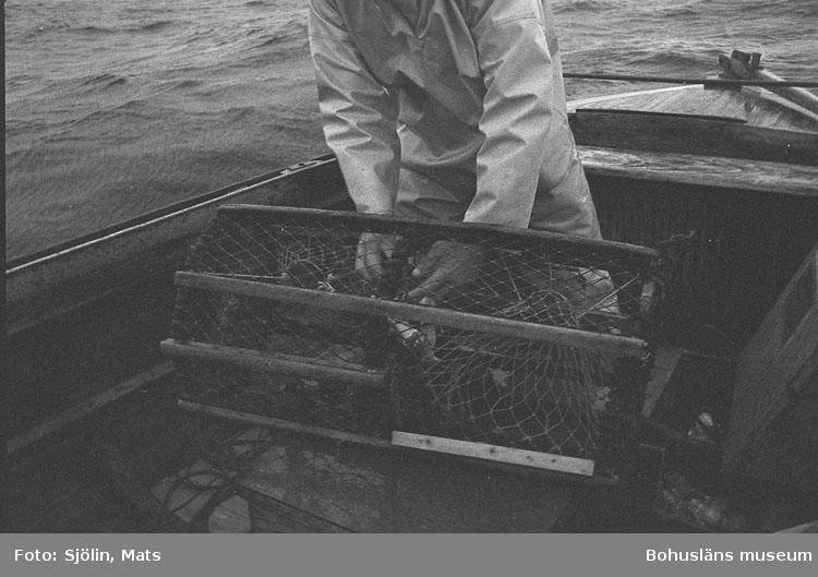 Hummerfiske i bohuslänska vatten år 1978