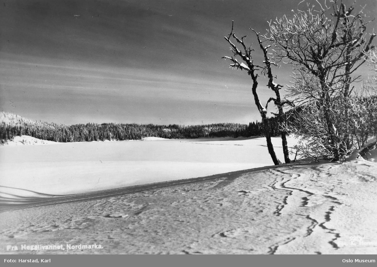 islagt vann, skog, snø