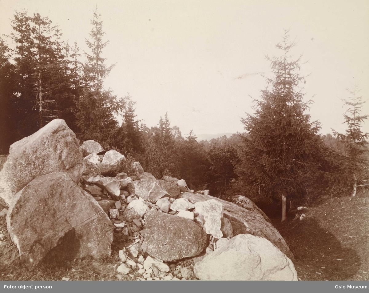 steinrøys, skog