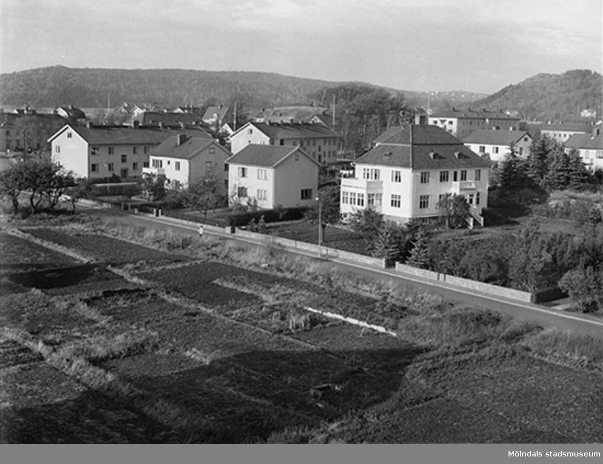 Längst till höger ses trädgårdsmästare Peterséns villa Annehill på Växthusgatan 16B. Se även 1994_0996.