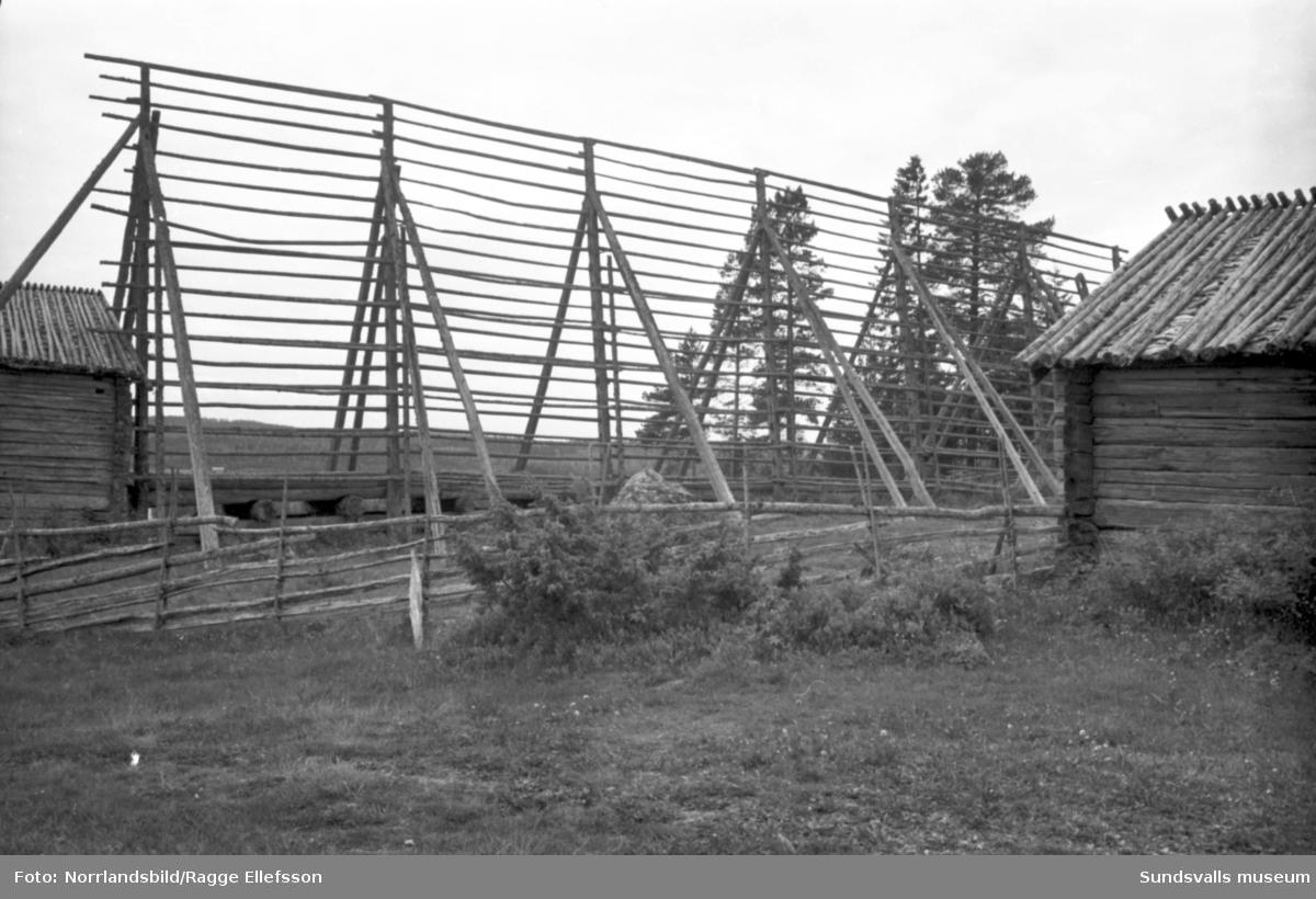 Gammelgårdar från 1700-talet i Myckelgensjö. Fotograferat för Expressen.