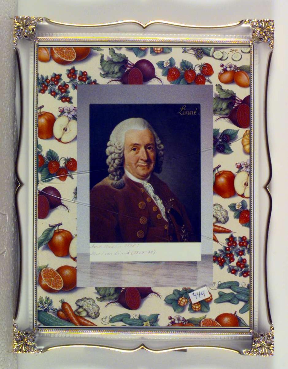 Fargeportrett av Carl von Linné (1707-78). Som bakgrunn er brukt et utklipp fra et magasin hvor motivet er forskjellige sorter frukt og grønnsaker.