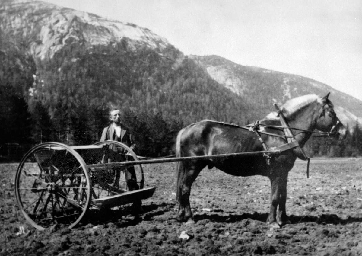 Åmlibilder samlet av Åmli historielag Olav N. Smeland med første radsåmaskin