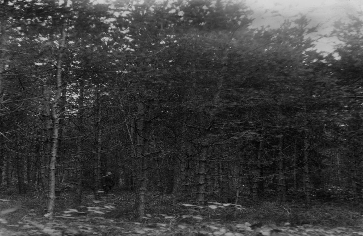 Gjerstad skog