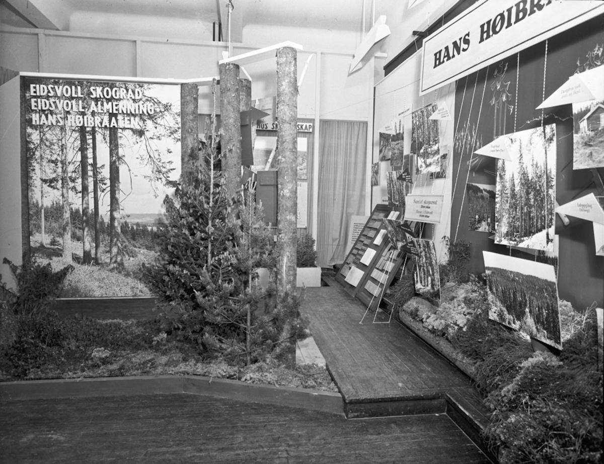 Fra bygdeutstillingen i 1955. Hans Høibraaten – om skog og arbeid i skogen. Eidsvoll Skogråd, Eidsvoll Almenning.