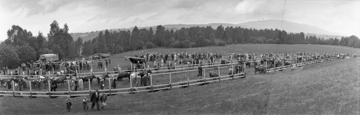 Panoramabilde fra Eidsvoll Bygdeutstilling i 1955. Ved Eidsvoll Landsgymnas.