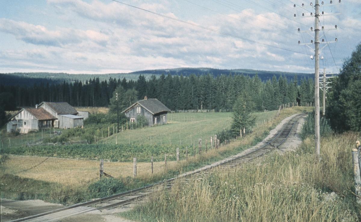 Tertittens spor i Harkerudbakken