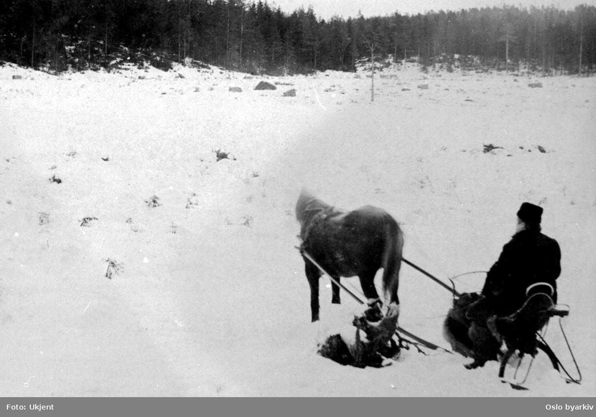Vedstabler på hogstflate eller myr i Marka, vinterbilde. Muligens tatt i forbindelse med oppdemningen av Skjærsjøen.
